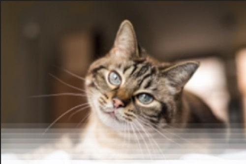 איך בוחרים מוצרים איכותיים לחתולים
